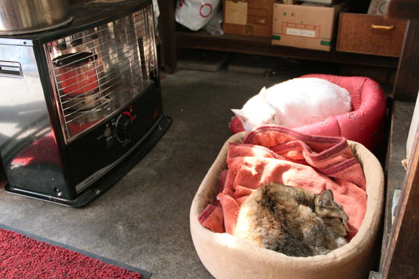 柳川 はりまや 猫