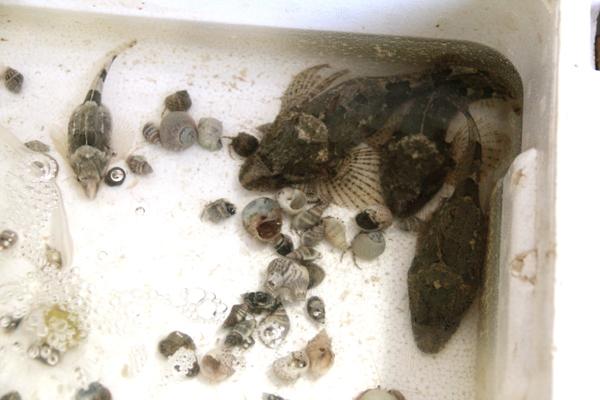 おきのはた水族館 ヤマノカミ