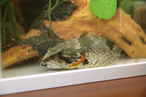ヤマノカミ おきのはた水族館