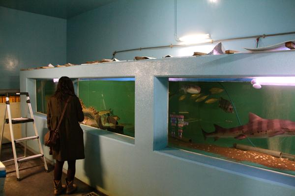 おきのはた水族館 大水槽