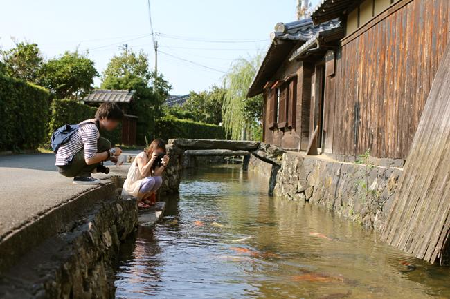 旧湯川家屋敷 鯉