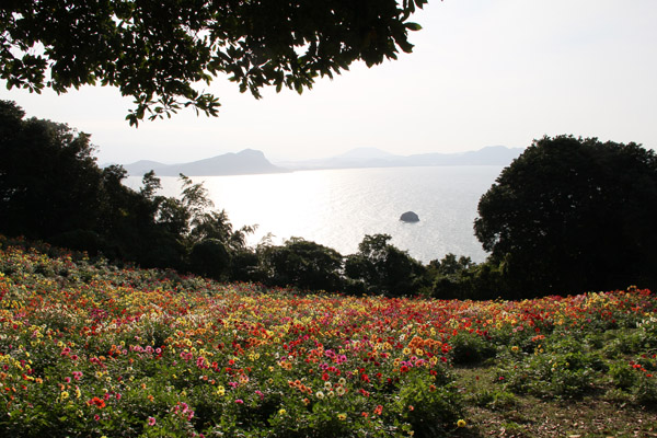 能古島 ダリア