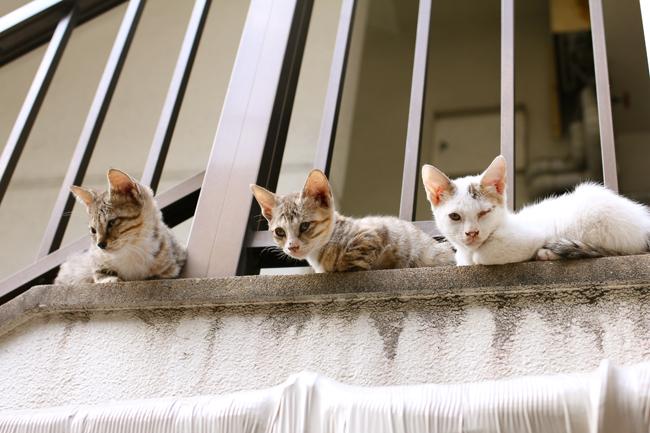 長崎 中華街 子猫
