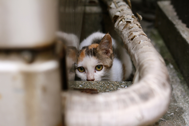 長崎中華街 子猫
