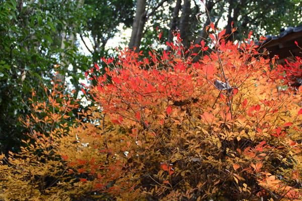 城山 紅葉 神社