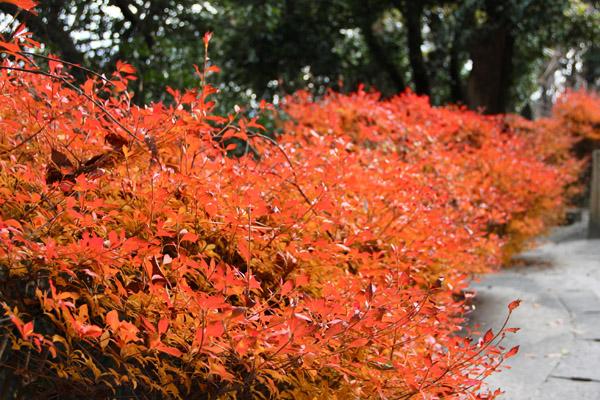 城山 紅葉 紅葉