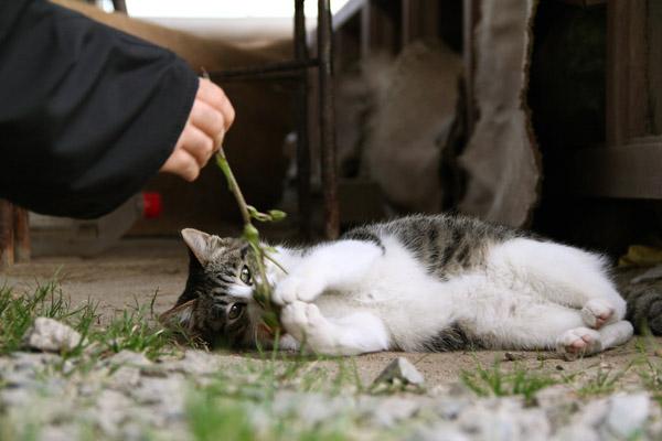 芥屋の大戸 猫