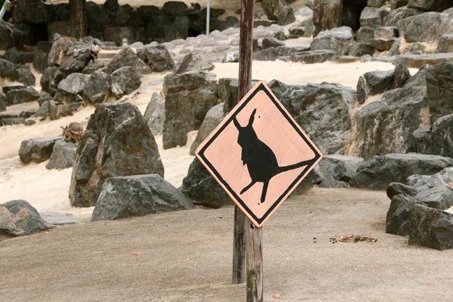 ワラビー カンガルー 響灘 グリーンパーク