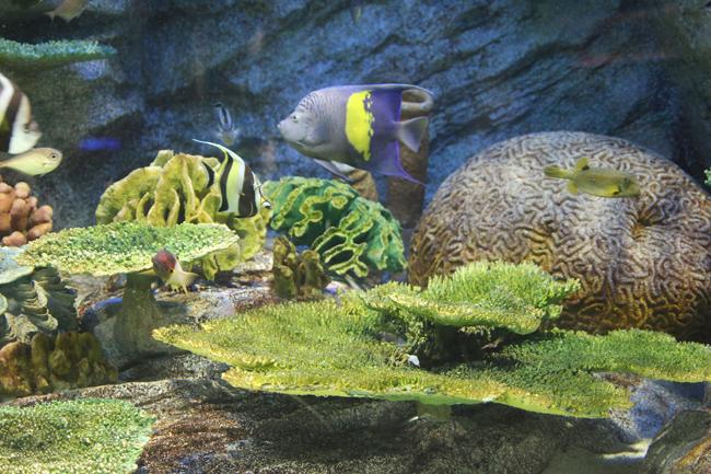 マリンワールド サンゴ