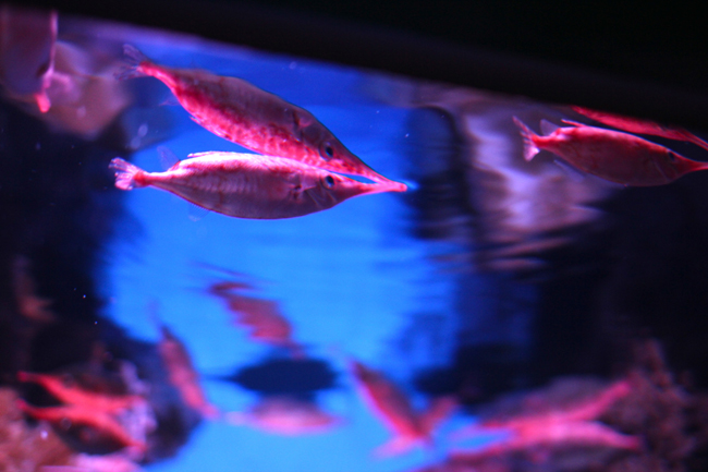 マリンワールド 魚