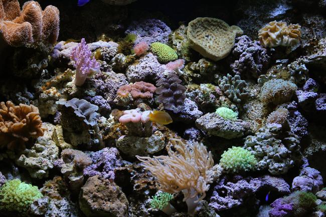 マリンワールド サンゴ イソギンチャク
