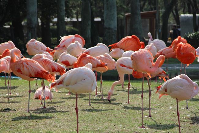 海ノ中道海浜公園 フラミンゴ