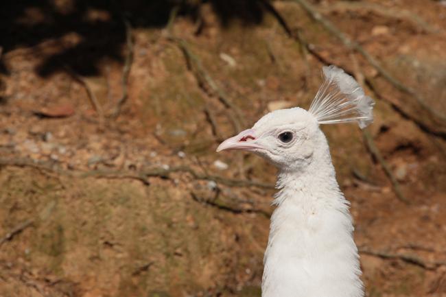 大牟田市動物園 鳥