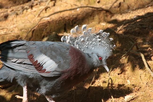 大牟田市動物園 鳩
