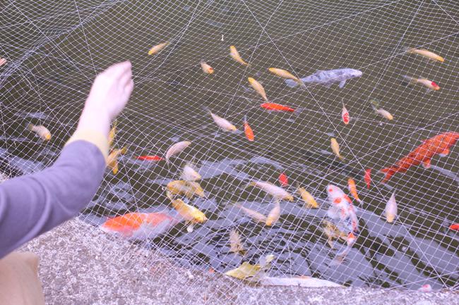 稲積水中鍾乳洞 鯉
