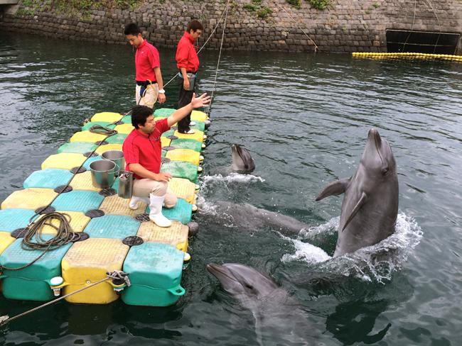 鹿児島水族館 イルカ