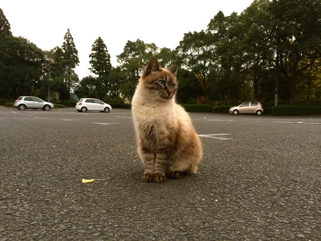 曽木の滝 ネコ