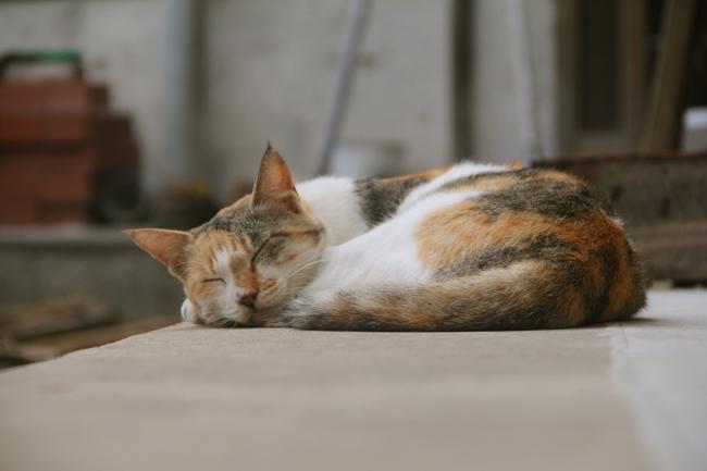 野母崎 猫