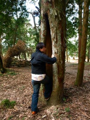 木の割れ目 遊ぶ