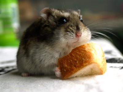 もちまろ パン