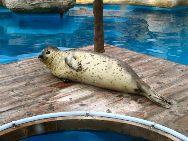 マリンワールド 海獣館 アザラシ