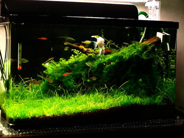 60cm水槽 草原