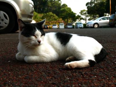 猫 駐車場