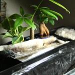 上部フィルターで水栽培。