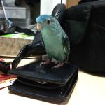 財布とインコと私事。
