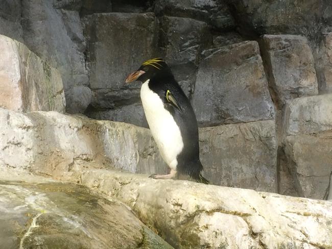 八景島シーパラダイス ペンギン