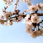 福智山ろく花公園 -春編-
