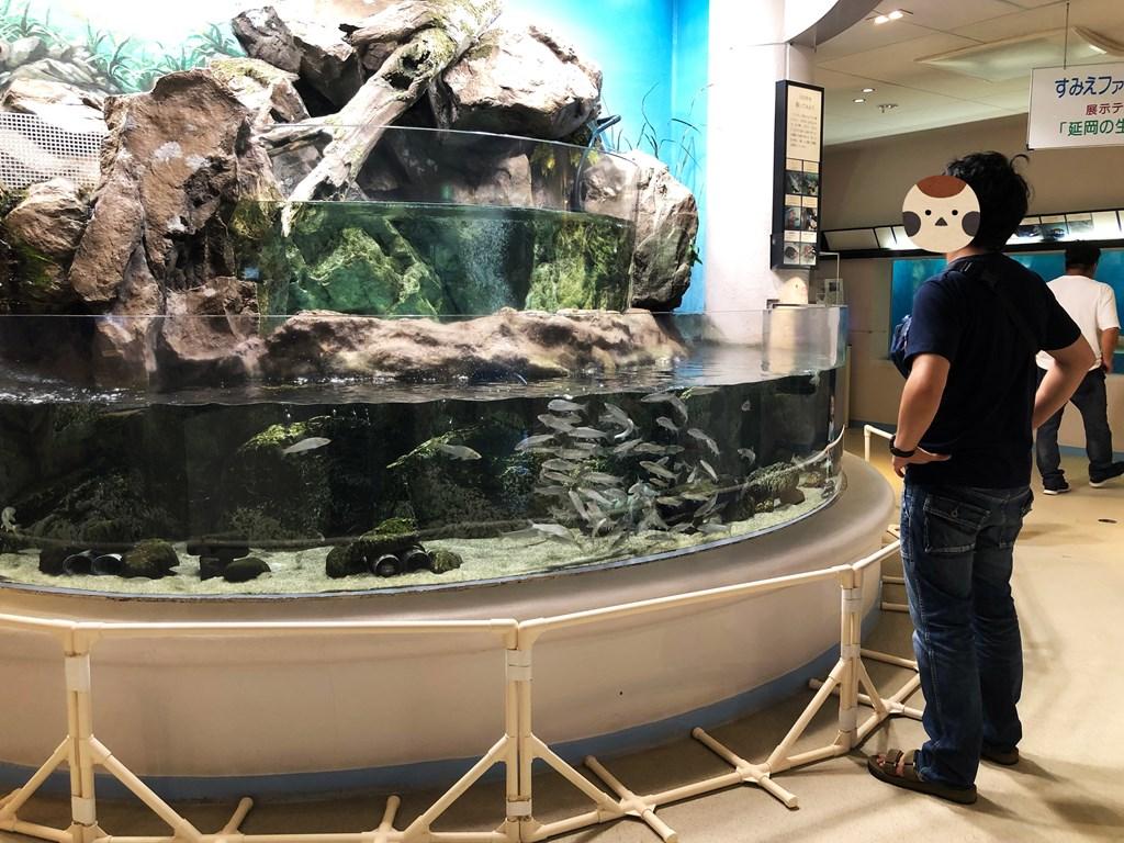 すみえファミリー水族館