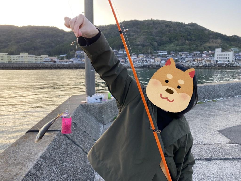 唐房漁港 アジ